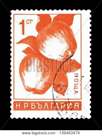 BULGARIA - CIRCA 1956 : Cancelled postage stamp printed by Bulgaria, that shows woman harvesting apples.