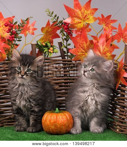 Cute fluffy kittens near decorative wattle fence over white background