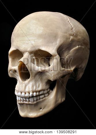 Human skull model isolabed over black background