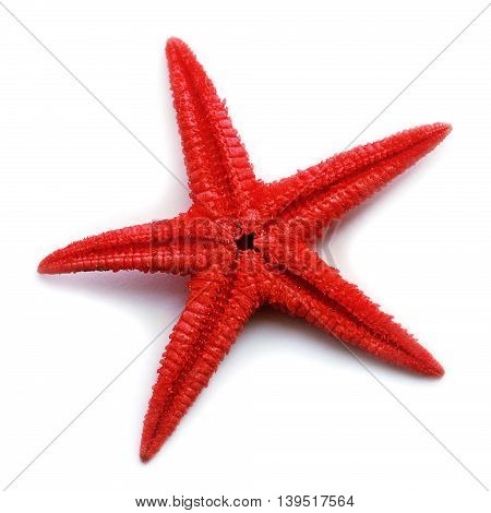 Beautiful red starfish isolated over white background