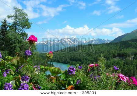 Alaska Mountains And Flowers
