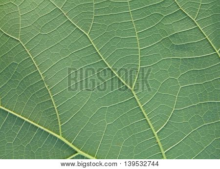 beautful leaves green leaf texture background .