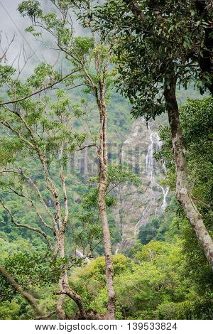 Trees in the rain forest and waterfall background Tak ,Thailand.