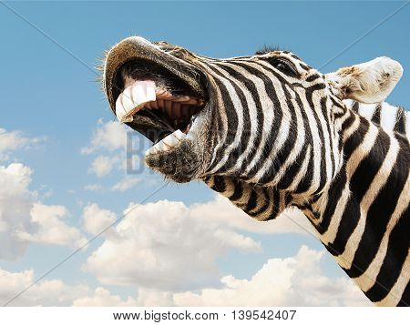 Zebra striped happy laughting with teeth smile on a sky background