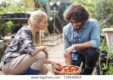 Happy coworkers kneeling by tomato basket at greenhouse