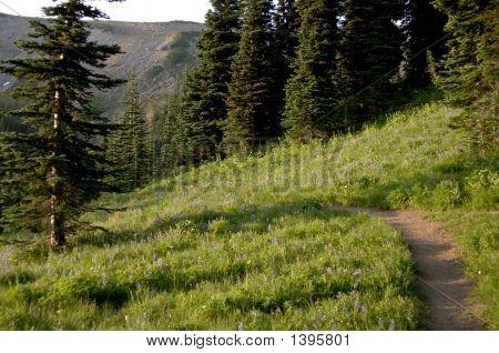 Mountain Trail With Wild Flowers On Mt Rainier