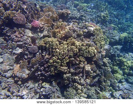 Underwater Wildlife