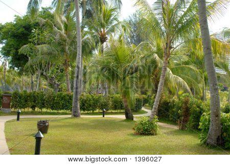 Palm Grove Foliage