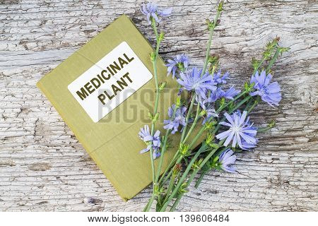 Medicinal plant common chicory (Cichorium intybus) and herbalist handbook. Used in herbal medicine healthy eating. The roots of chicory are used as a coffee substitute