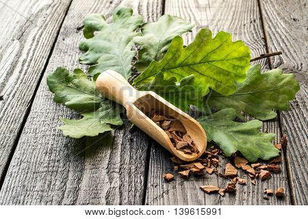 Medicinal plant oak (Quercus). Branch and oak bark in a scoop on a dark wooden table. In herbal medicine used the bark leaves and acorns. Acorns are used as a substitute for coffee. Selective focus