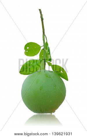 grapefruit green isolated on white background .