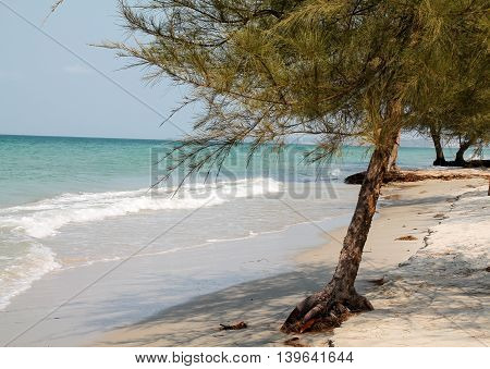 Paradise Beach Side View With Trees