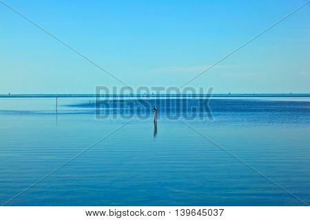 Bird Sitting On A Wooden Stem In The Ocean Waiting For Fishes