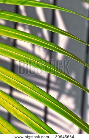 Beautiful Palm Leaf Texture In Sunset