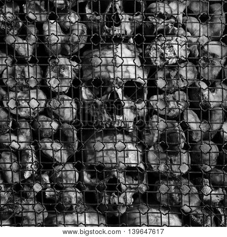 Black and white shot of ancient human skulls and bones