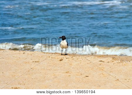 seagull standing at the sandy beach in the waves