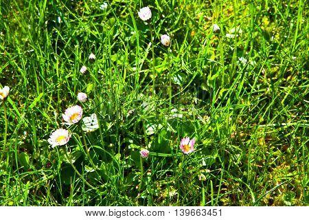 Grass In Wonderful Morning Light