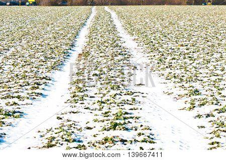 Mark Of Tire On Snow Field In Winter