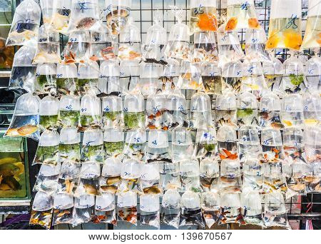 Plastic Bags Of Fishes For Sale