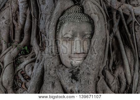 The small-headed temple,Buddha head in tree Wat Mahathat,thailand,Ayutthaya,Ayutthaya,