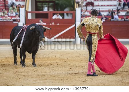Jaen SPAIN - October 17 2008: Spanish bullfighter Cesar Jimenez bullfighting with the crutch in the Bullring of Jaen Spain
