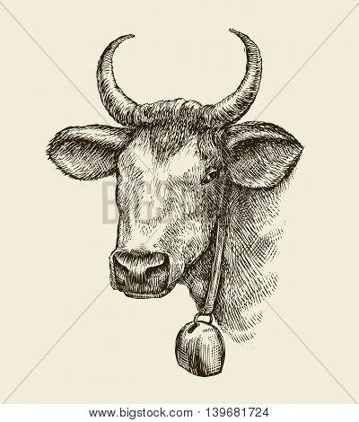 Hand-drawn cow, bull. Sketch a farm animal. Vector illustration