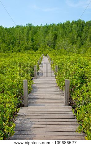 """Wooden walkway bridge on Ceriops Tagal field in mangrove forest located at Rayong Thailand. This attraction called """"Tung Prong Thong"""" . poster"""
