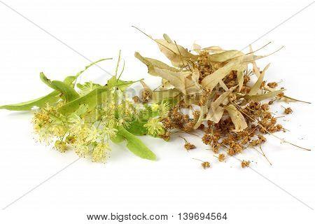 Tilia cordata (linden fresh dried) on white background.