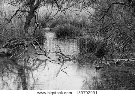 Small overgrown lake in France. Trees refections on water