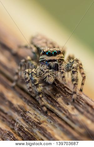 Detail shot of a little spider outdoor at a sunny day