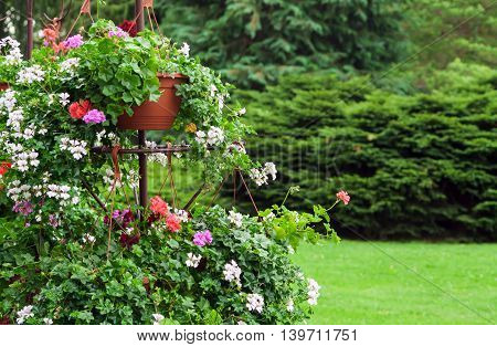 beautiful flower bed with red, white and shades and diversified colors and sizes in two tiers on the background of trees and grass clippings