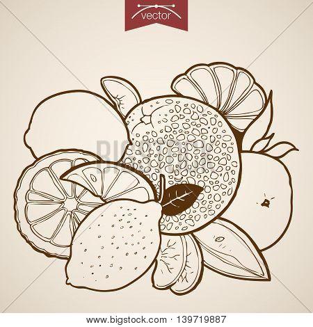 Engraving vintage hand drawn vector lemon orange papaya Sketch