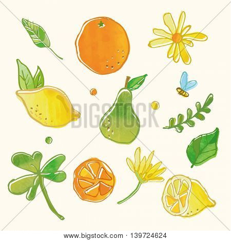 fresh fruit and floral drawing graphic