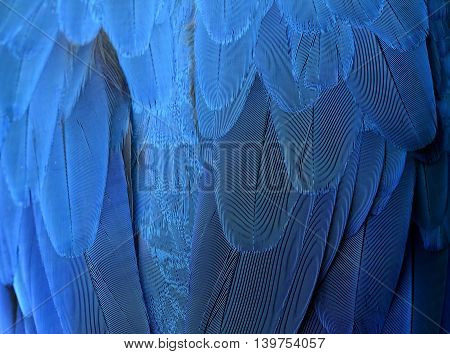 An Exotic Blue Background, Feathers Of The Blue-and-yellow Macaw (ara Ararauna) In Close Up