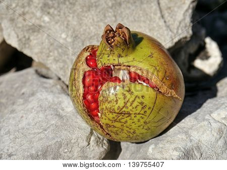a Pomegranate on stones in the background.