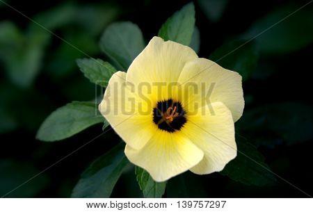 flor amarilla , naturaleza , jardin a las sfueras de la ciudad
