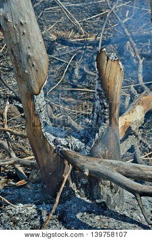 A landscape in leafy forest after fire. Spring.