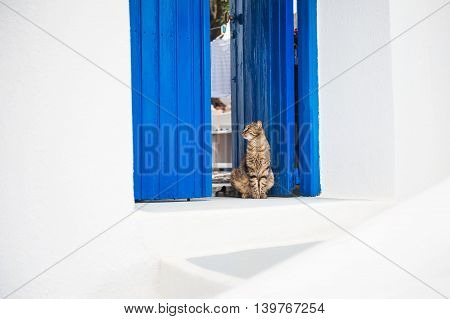 Cat sitting on the doorstep. White and blue architecture on Santorini island Greece.