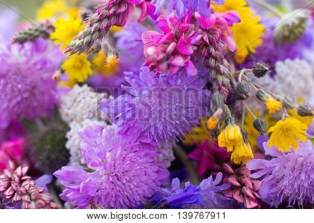 Colorful wildflowers bunch close-up, bright floral background. Mixed bouquet of of different kinds of field flowers