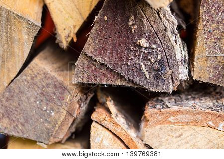 End face of logs in a woodpile firewood. A close up small depth of sharpness several logs in a shot