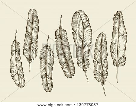 Hand-drawn sketch feathers, plumage, fluff. Sketch vintage writing feather. Vector illustration