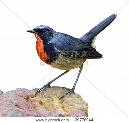 Firethroat (luscinia Pectardens) So Called David's Rubythroat Or Pere David's Orangethroat, The Beau