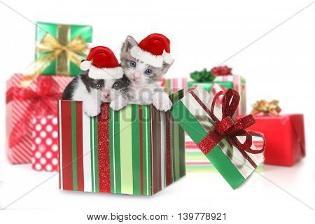 Adorable Box of Kittens as a Christmas Gift