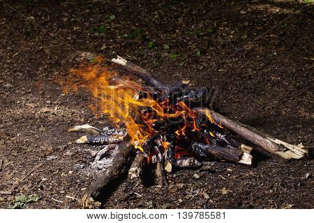 the bonfire is burning in a forest