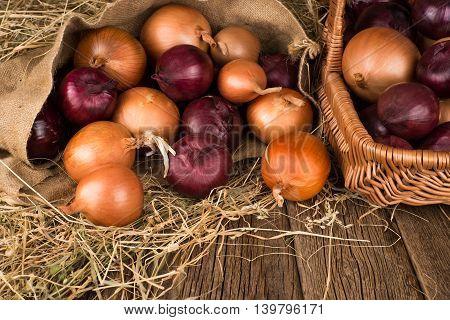 onion farm burlap.onion farm burlap.onion farm burlap