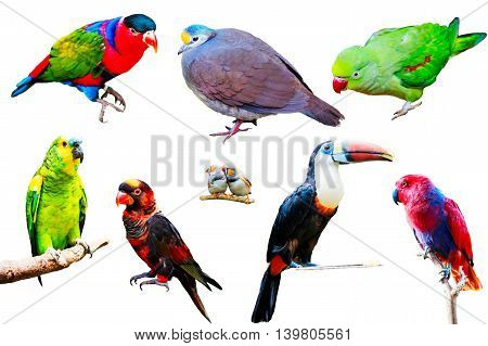 Different Parrots isolated on white background collection
