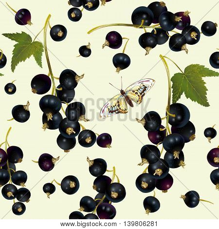 Vector realistic illustration of black currant with leaves. Isolated on light green background. Design for tea, ice cream, cosmetics, candy and bakery with black currant filling, health care products.