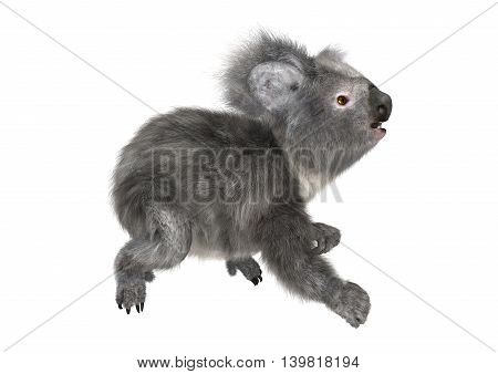 3D Rendering Koala Bear On White