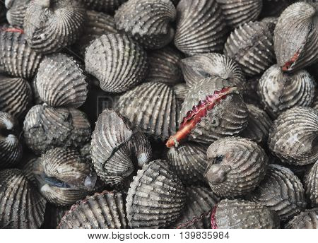 Selective focus of  Fresh cockles in market, Thailand / Seafood image