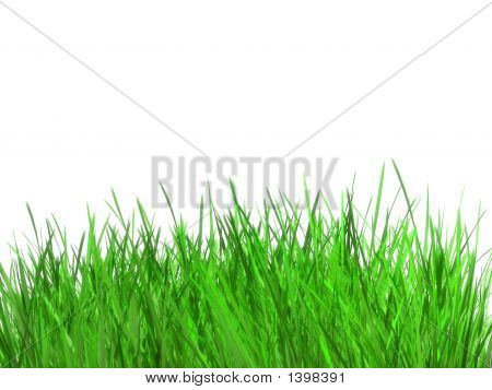 Grass6K